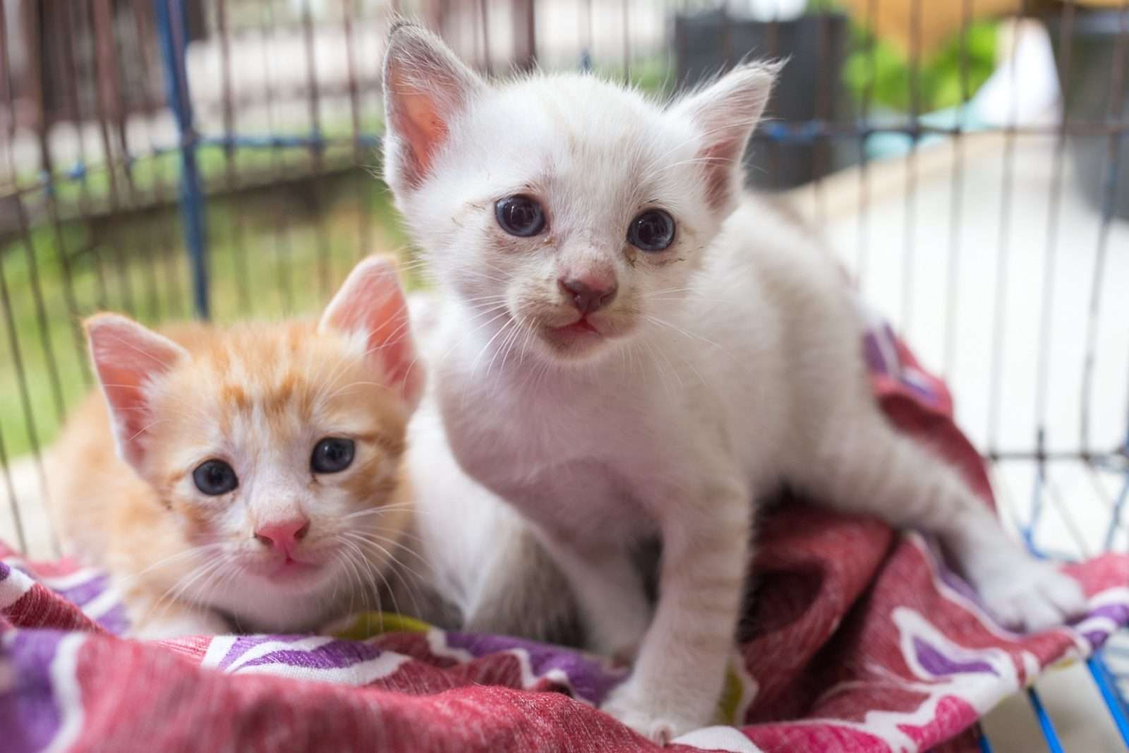 Adopting a Rescue: How to Choose the Right Kitty for Your Home
