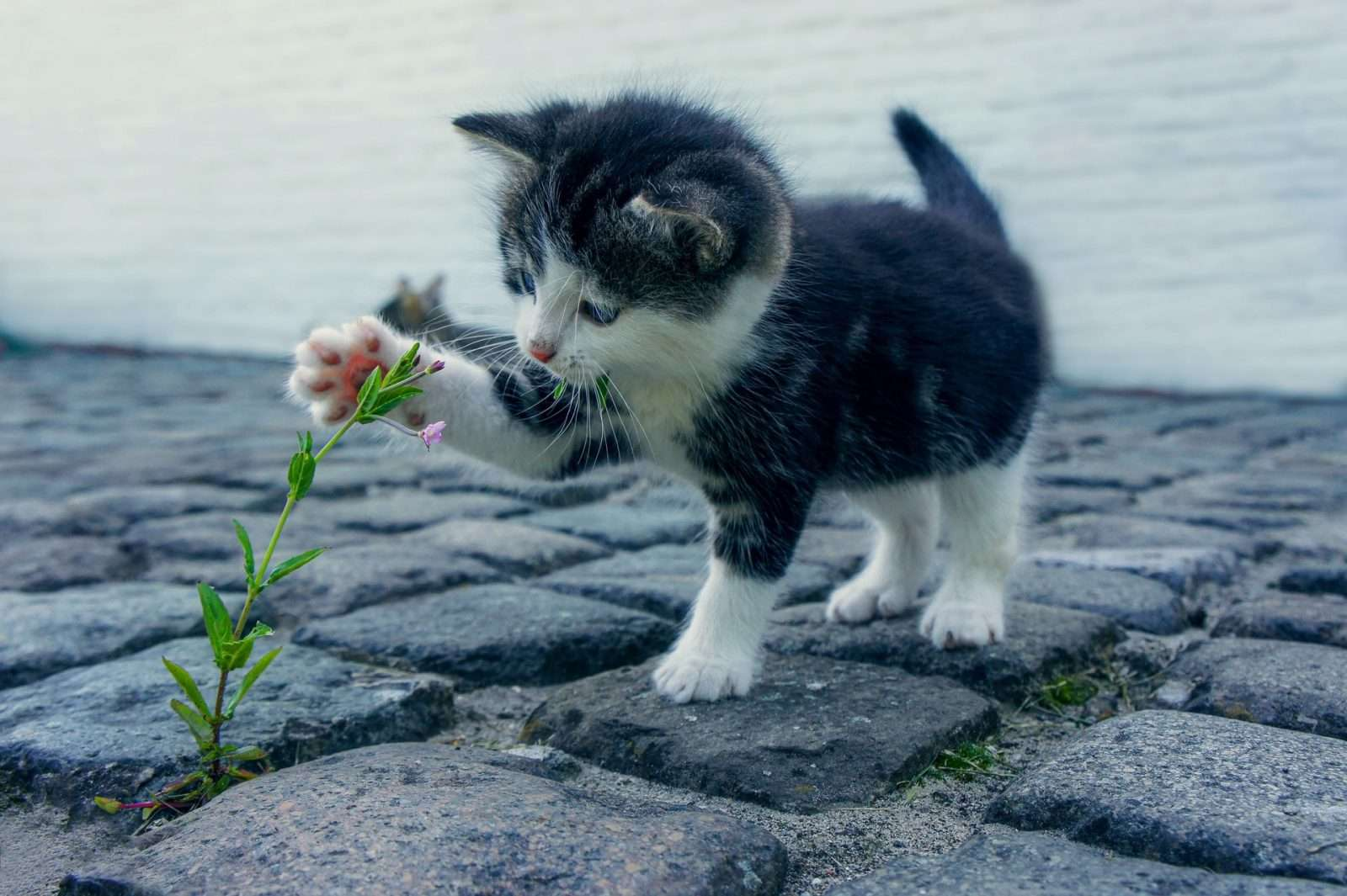 Why Cats Eat Plants