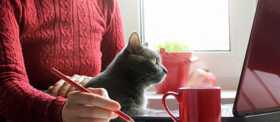 Spending Time WIth Your Cat